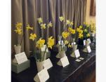 Our beautiful Daffodil display